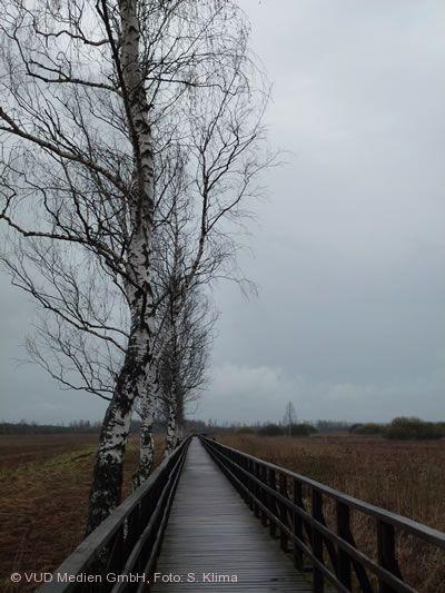 """Nebel über dem Moor"" Bad Buchau am Federsee"