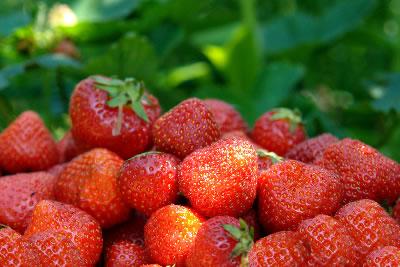 """Erdbeerfest - """"Erdbeeren satt!"""" Oberkirch"""