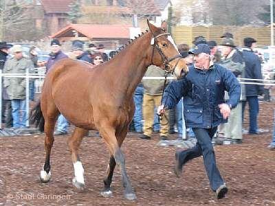 194. Traditioneller Pferdemarkt Öhringen