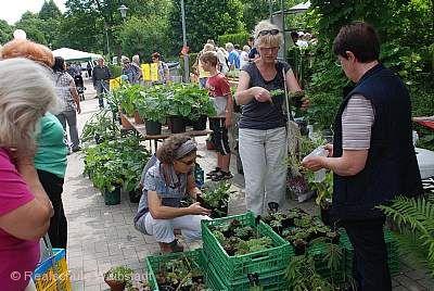 Kraichgauer Gartenbörse Waibstadt am 25.05.2019