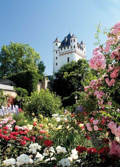 Rosentage Eltville am Rhein