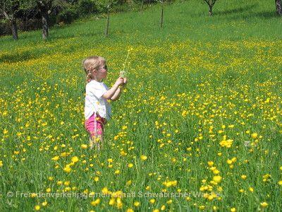 Tag des Schwäbischen Waldes Murrhardt