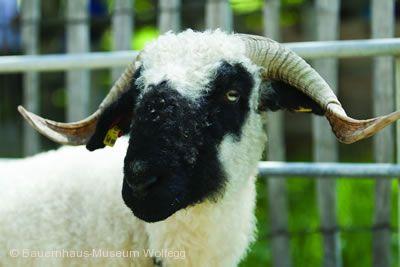 Wolle, Tuch und Handarbeit Wolfegg
