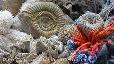 """""""Als die Steine noch lebten. 150 Millionen Jahre Albgeschichte"""" Blaubeuren"""