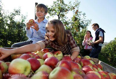 Apfelwochen am Bodensee Markdorf