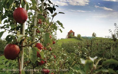 Bodensee Apfelwochen Markdorf