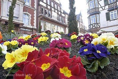 Blütensonntag Lahr / Schwarzwald