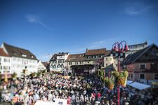 Chrysanthema 2017: Eröffnung Lahr / Schwarzwald