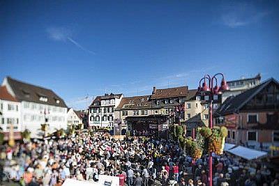 Chrysanthema: Eröffnung Lahr / Schwarzwald
