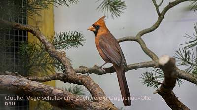 Exotische und bunte Vogelschau Gaggenau