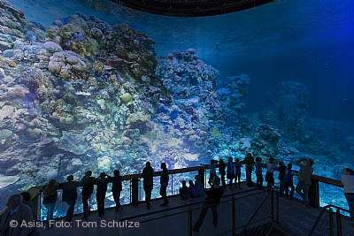 """Great Barrier Reef - Wunderwelt Korallenriff"" Pforzheim"
