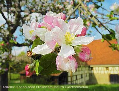 Ostern im Museum: Frühlingskränze binden Schwäbisch Hall