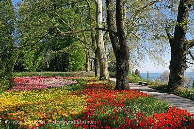 Tulpen und Frühjahrsblüte Insel Mainau