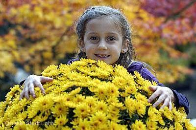 Chrysanthema: Familientag Lahr / Schwarzwald