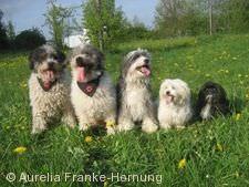 Mein Hund - Partner auf vier Pfoten Balingen