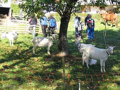 Menzenschwander Herbstmarkt mit Naturpark-Markt Sankt Blasien