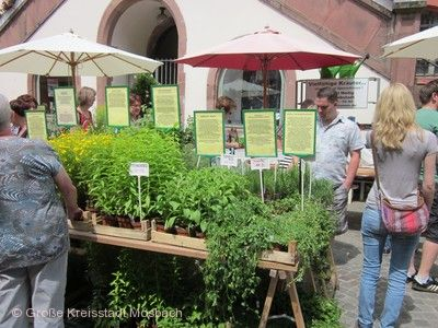 Naturparkmarkt Mosbach