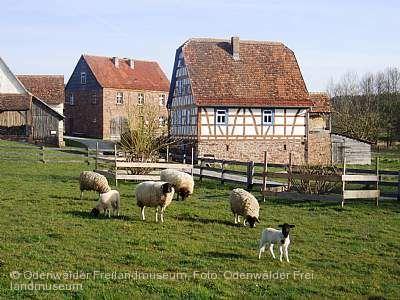 """""""Vom Schaf und seiner Wolle"""" Walldürn"""