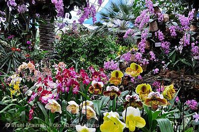 Orchideenschau Insel Mainau