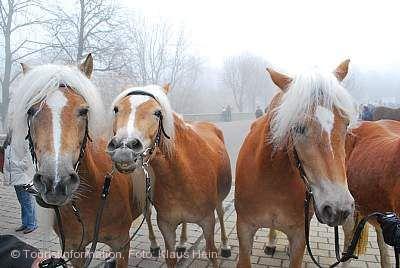 Traditioneller Pferdemarkt Creglingen