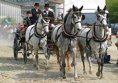 Pferdemarkt Ravensburg