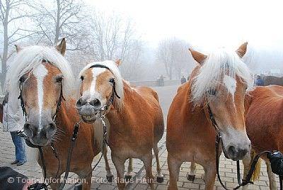 Großer Jubiläums-Pferdemarkt Creglingen