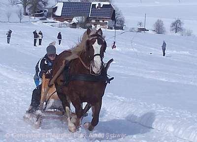 Pferdeschlittenrennen Sankt Märgen