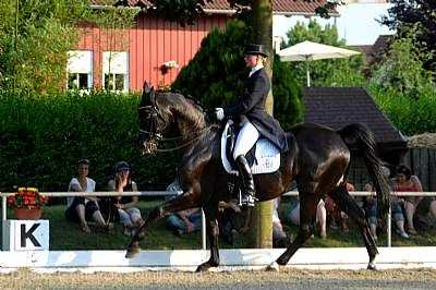 Baden-Württembergische Meisterschaften Springen, Dressur und Pony Schutterwald