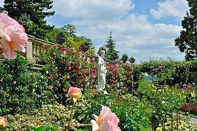 Rosenblüte und Wahl der Mainau-Rosenkönigin Insel Mainau