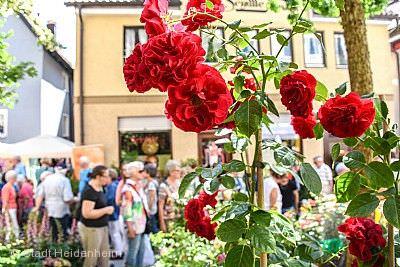 Rosenmarkt Heidenheim an der Brenz