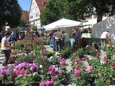 Rosenfelder Rosenmarkt