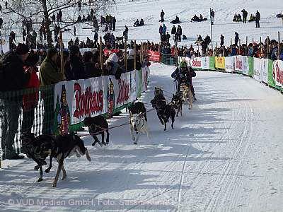Schlittenhunderennen - abgesagt!!! / Rahmenprogramm mit Huskys und Wintermarkt findet statt Todtmoos