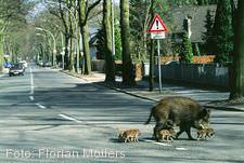 """""""Tiere in der Stadt"""" Ulm/Neu-Ulm"""