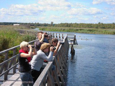 Vogelstimmenführung ins Banngebiet Staudacher Bad Buchau am Federsee