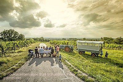 Bad Schönborner Weinwandertag